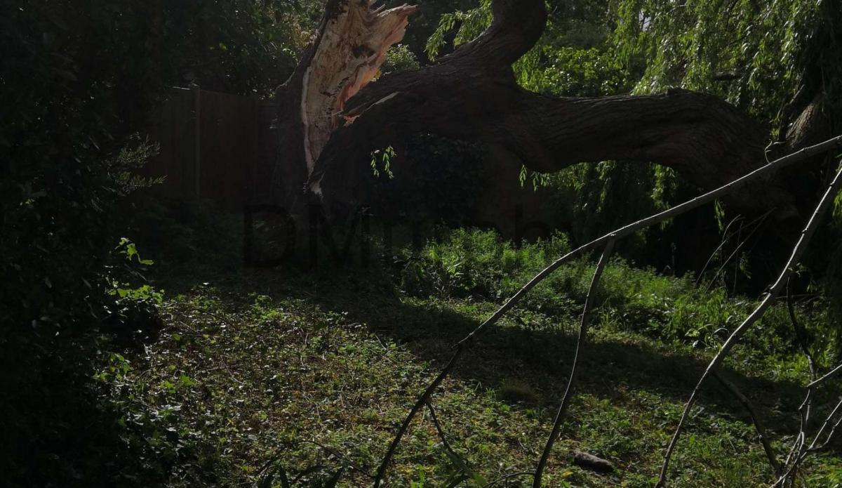DC2020 - Willow Tree Down-4